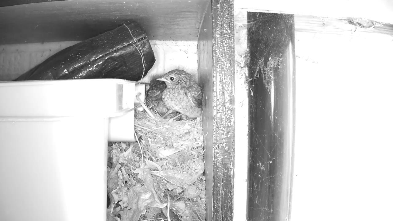 Robin Nest 2016-05-22 12-40-48.629