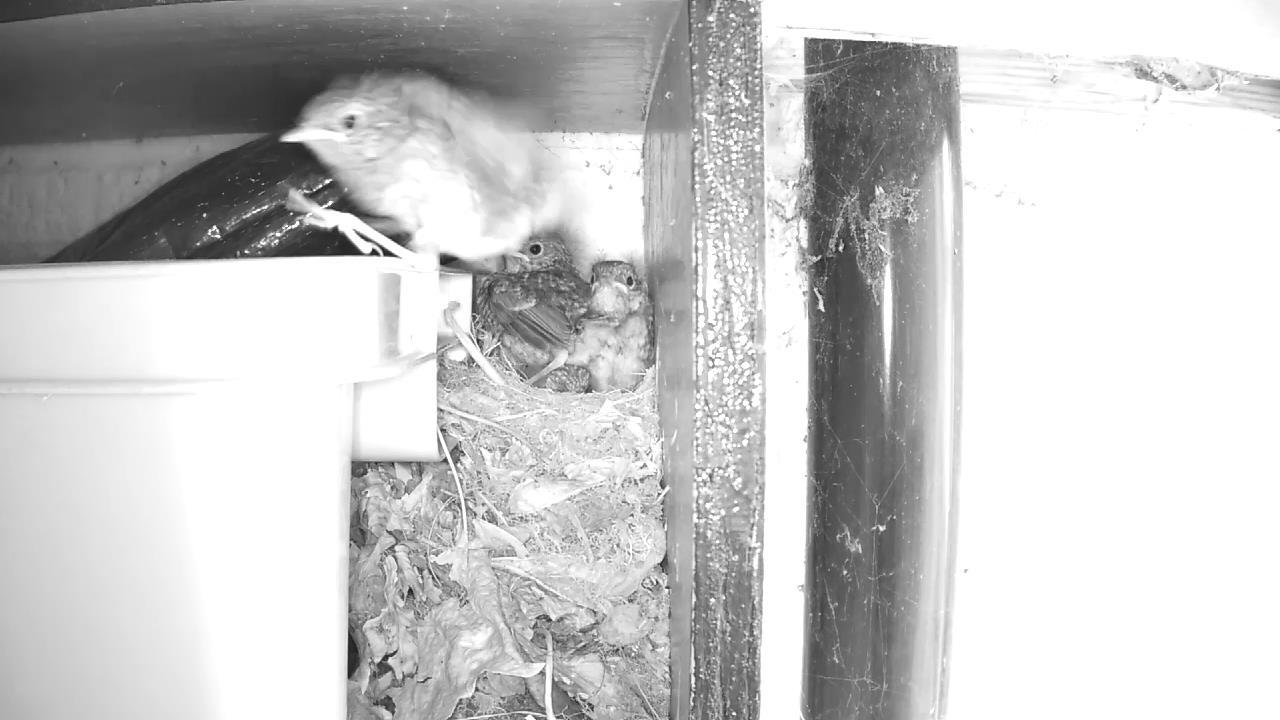 Robin Nest 2016-05-22 12-40-49.789