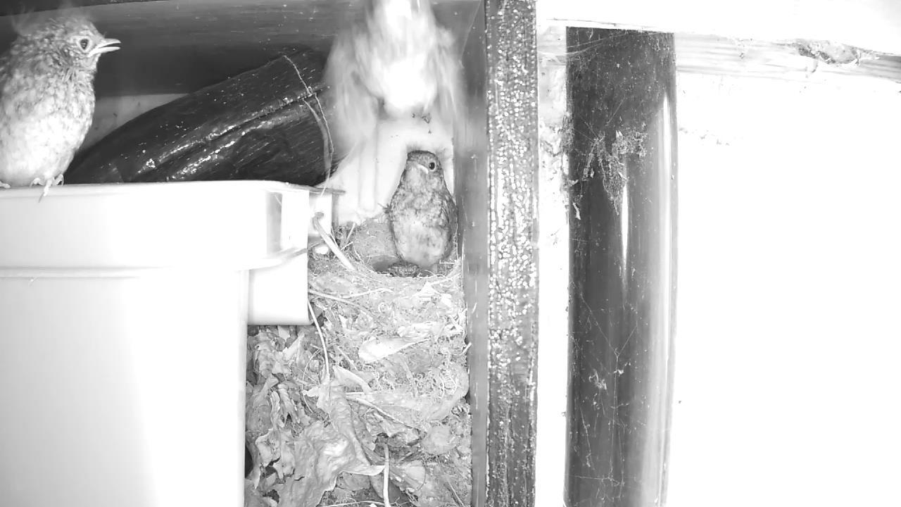 Robin Nest 2016-05-22 12-42-03.199