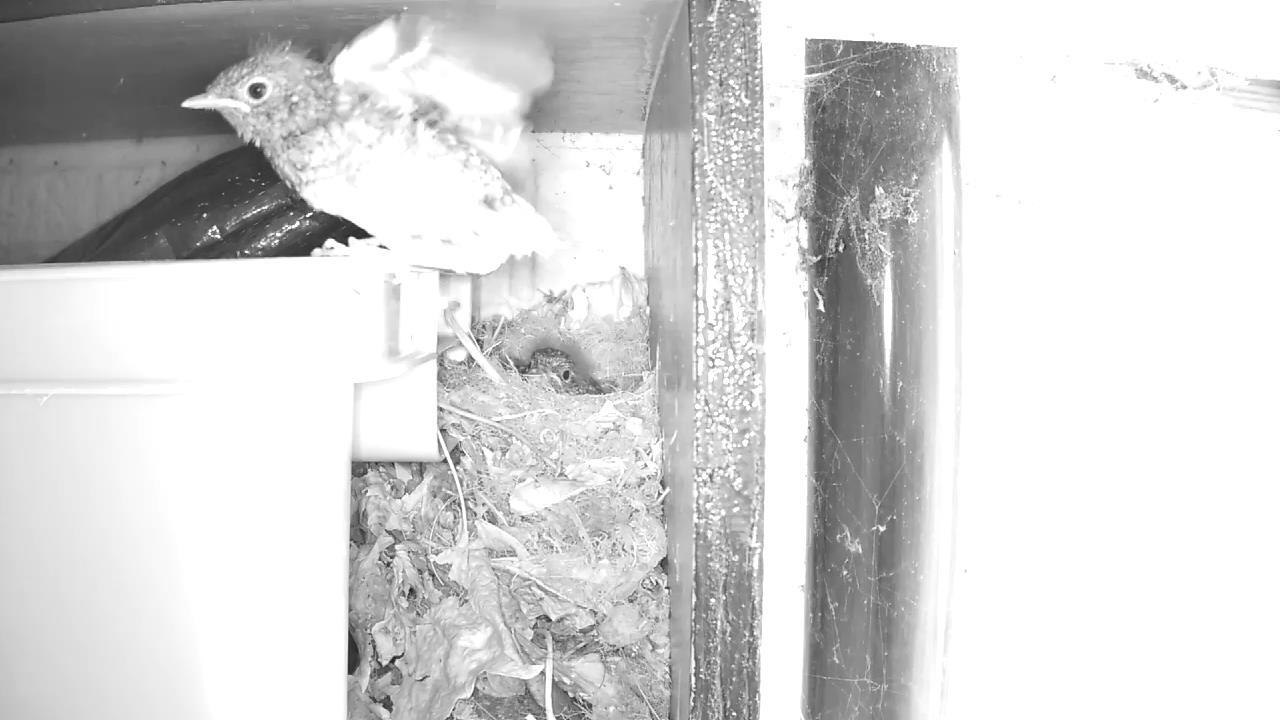Robin Nest 2016-05-22 12-47-57.852