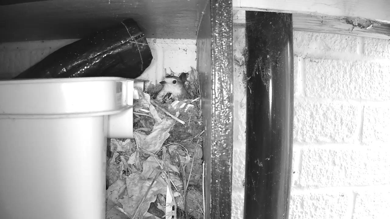 Robin Nest 2016-04-15 15-12-18.752