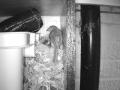 Robin Nest 2016-05-11 20-24-56.940